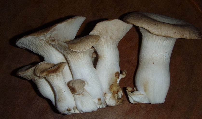 funghi-cardoncelli 2