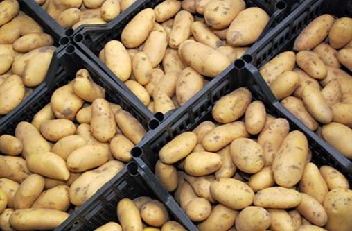 cassette di patate