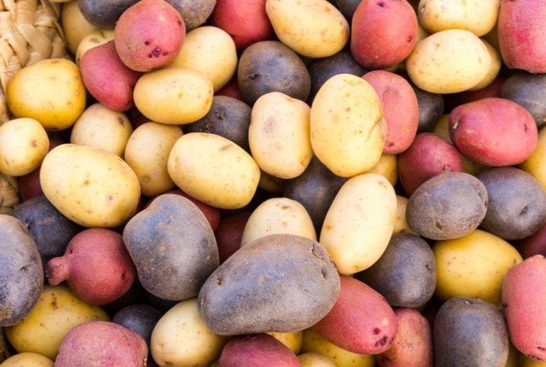 patate diversi colori