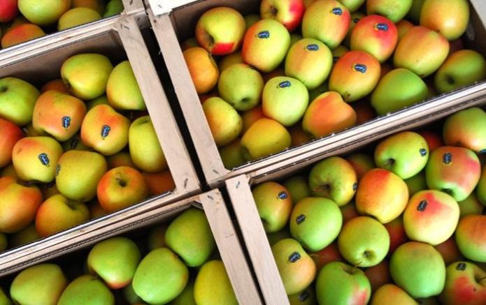 mele della val di non DOC