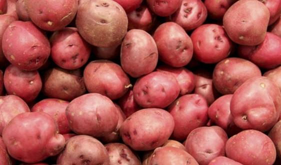patata rossa di colfiorito