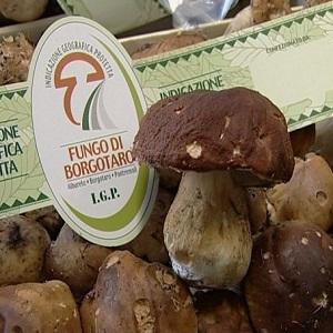 Fungo di Borgotaro