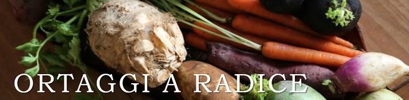 ortaggi a radice