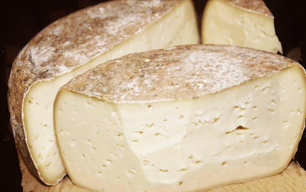 formaggio di capra o pecora a pasta pressata
