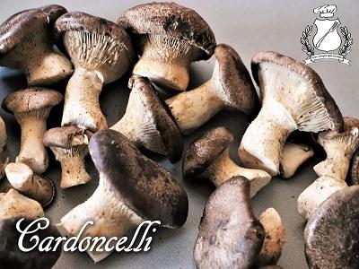 Cardoncelli