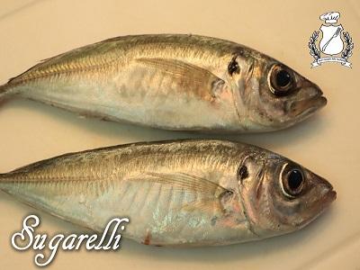 Sugarelli m